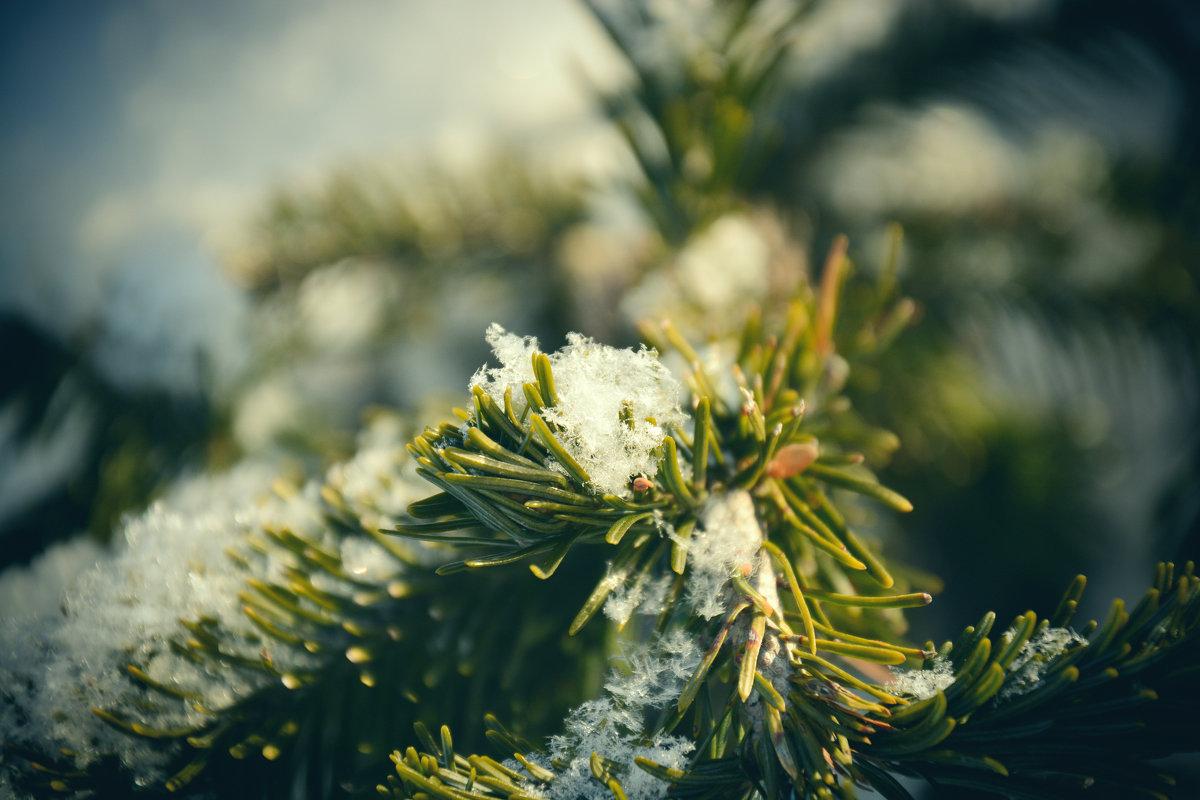 Первый снег - Юрий Фёдоров