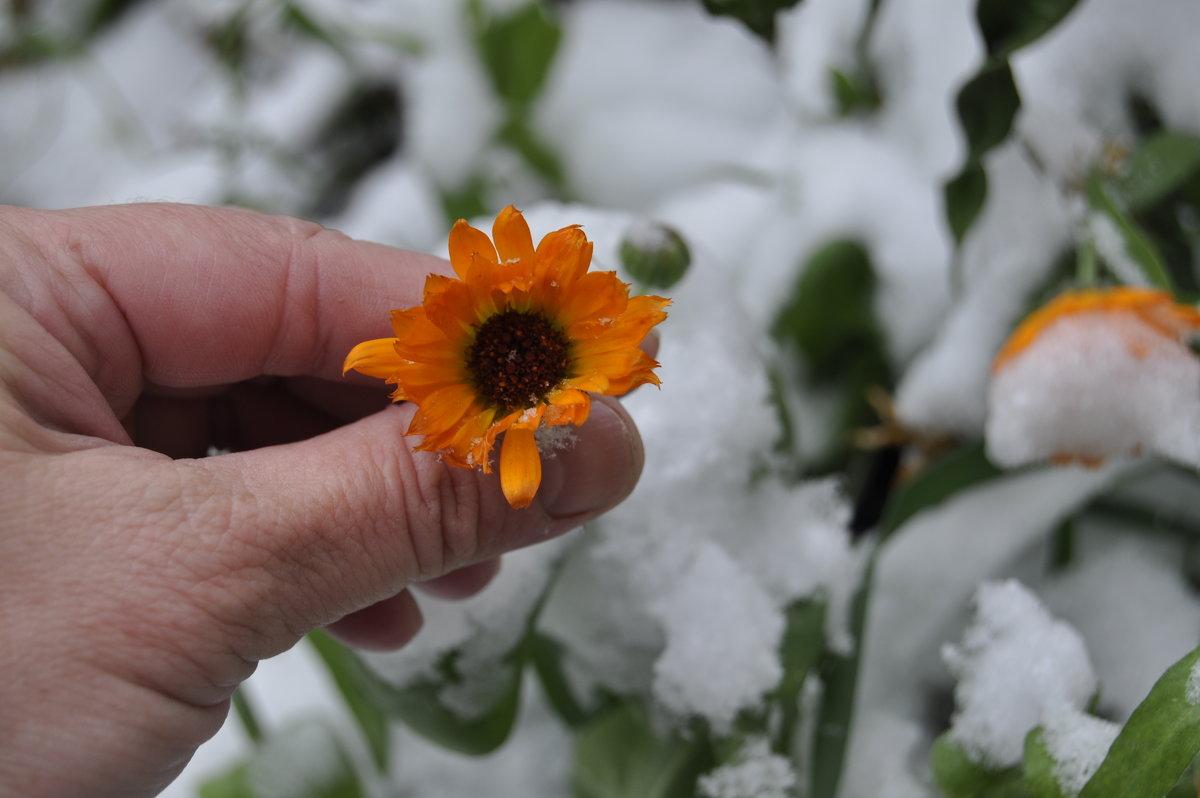 Зима однако, 3 октября в саду. - Tatyana Kuchina