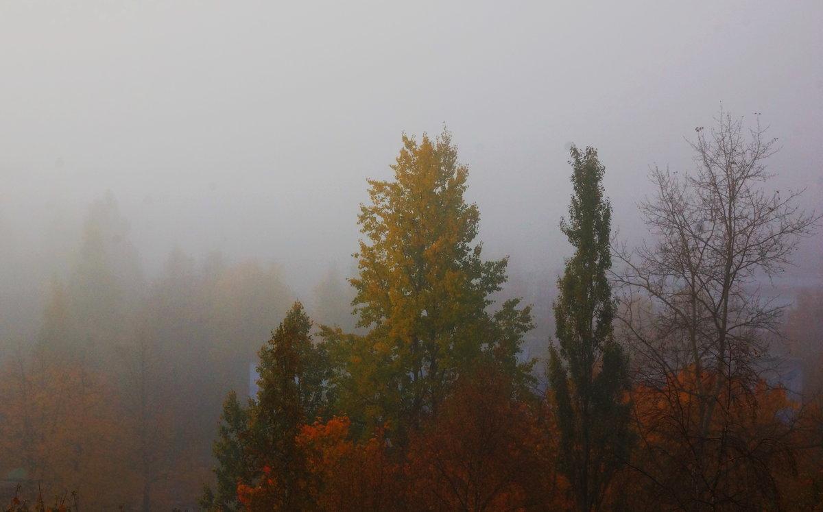 Питерский туман - Дмитрий Редьков
