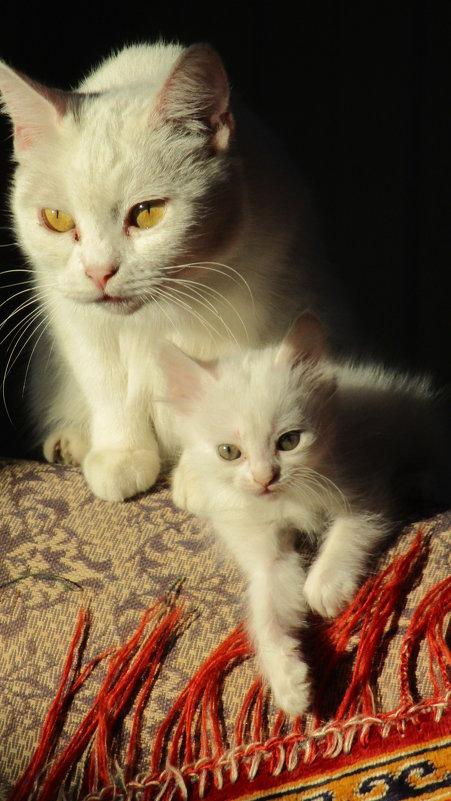 Кошки... - Владимир Павлов