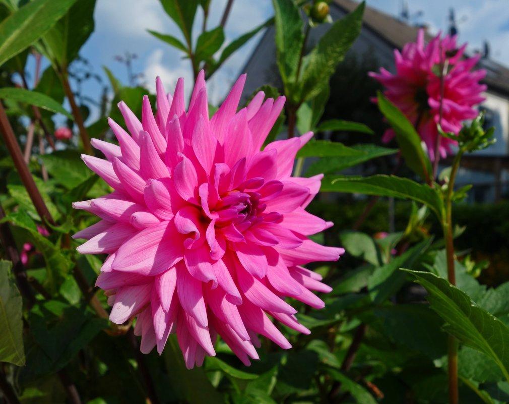 Величавые цветы  Гордо смотрят с высоты... - Galina Dzubina