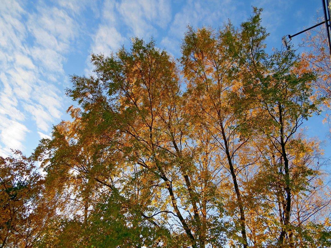 Осень - Вера Щукина