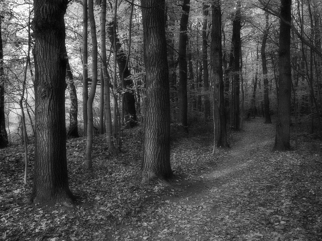 К тайнам битцевского леса - Александр
