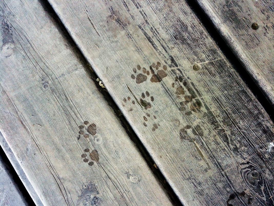 Здесь был Вася - red-cat.25