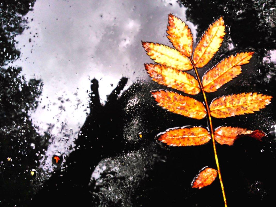 Недотрога-осень - Валерий Розенталь