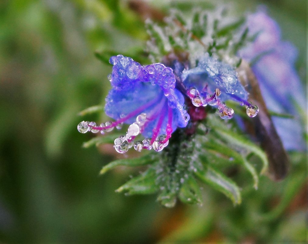 Последние цветы осени - Исаков Александр