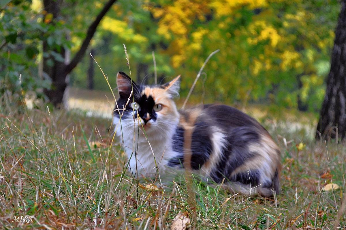 Кошка по имени Осень... - *MIRA* **