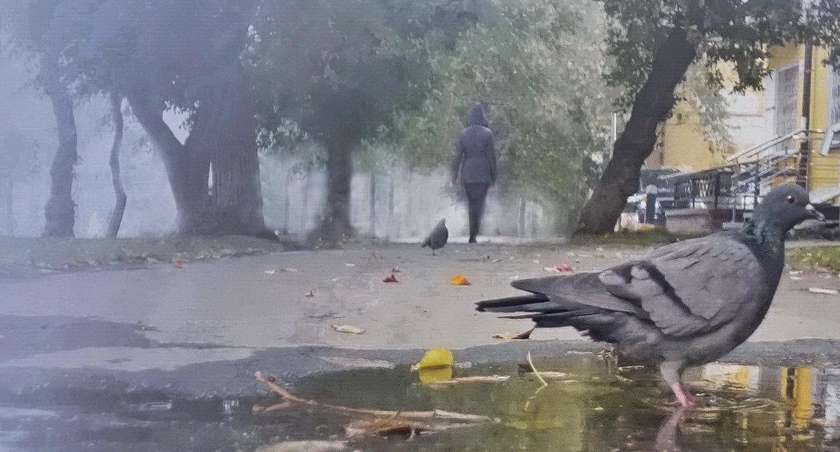 Утро туманное - Игорь