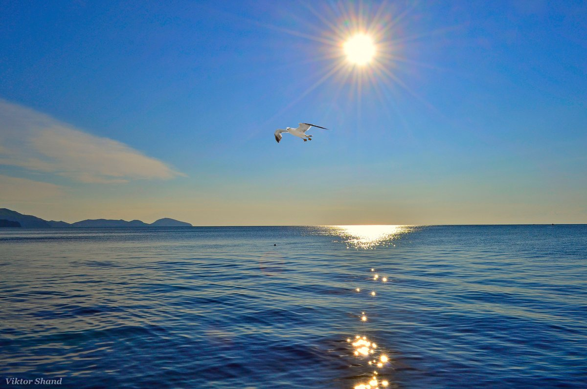 Утренняяя чайка - Виктор Шандыбин