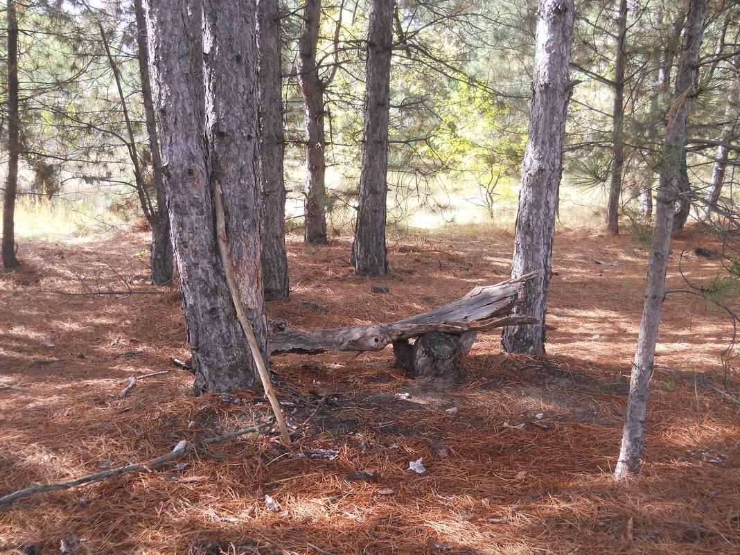 скамеечка в лесу - Галина
