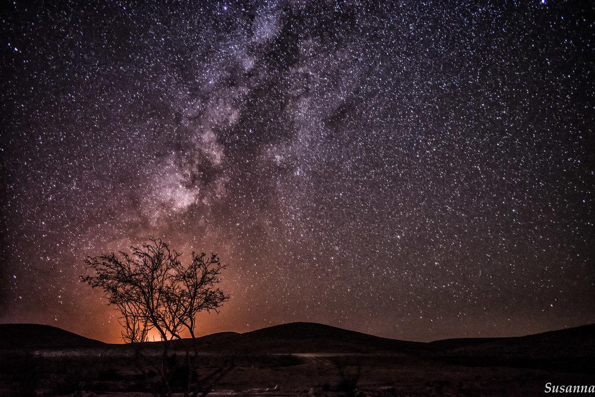 Ночь в пустыне - susanna vasershtein
