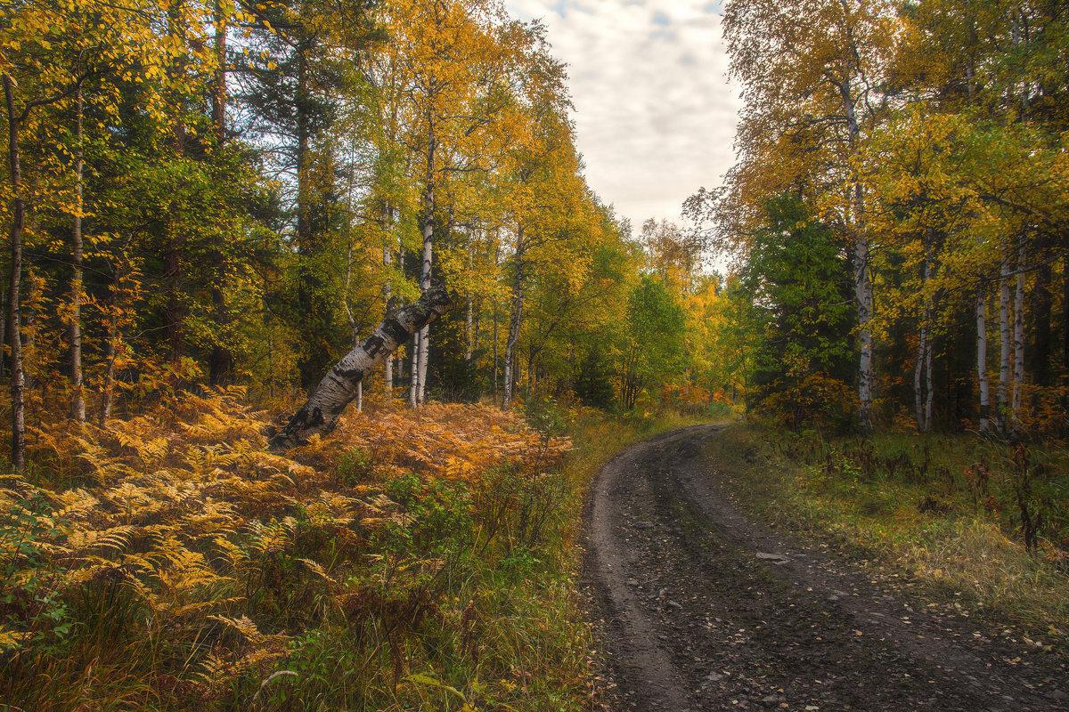 Лесная дорога - vladimir
