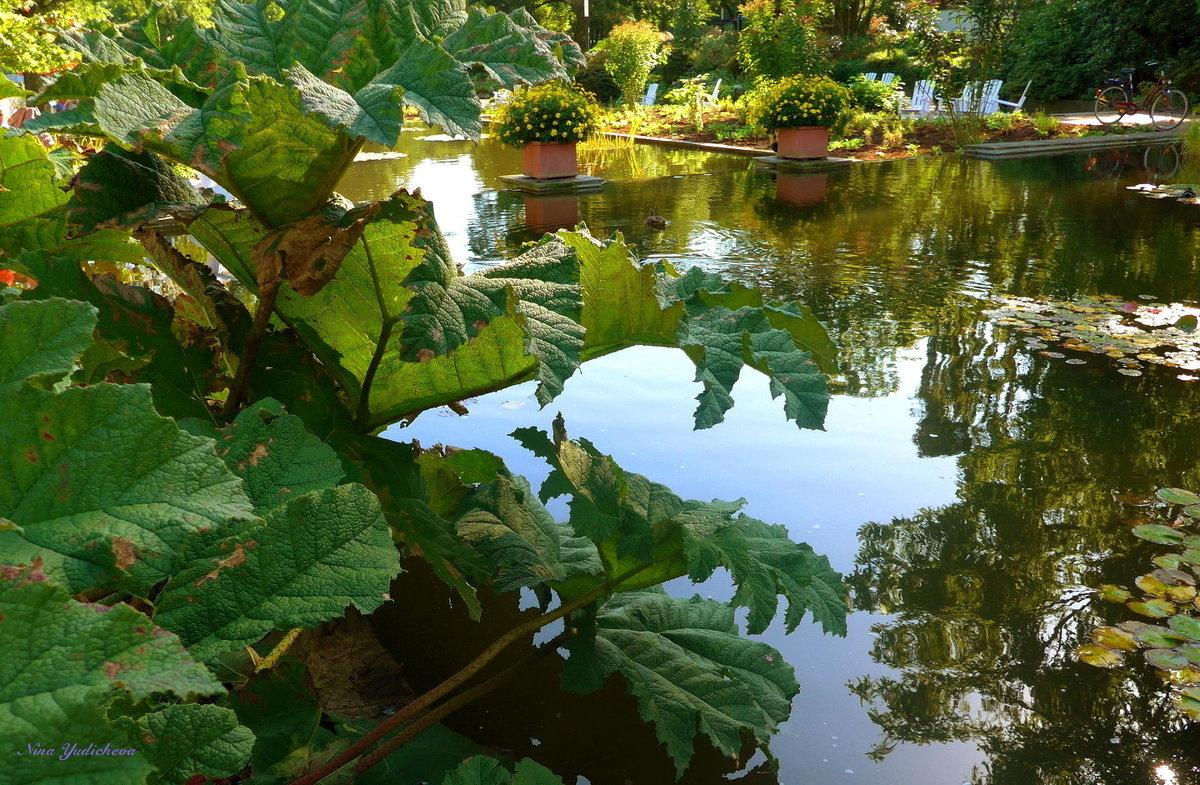 Парк цветов осенью (серия) У водной глади - Nina Yudicheva