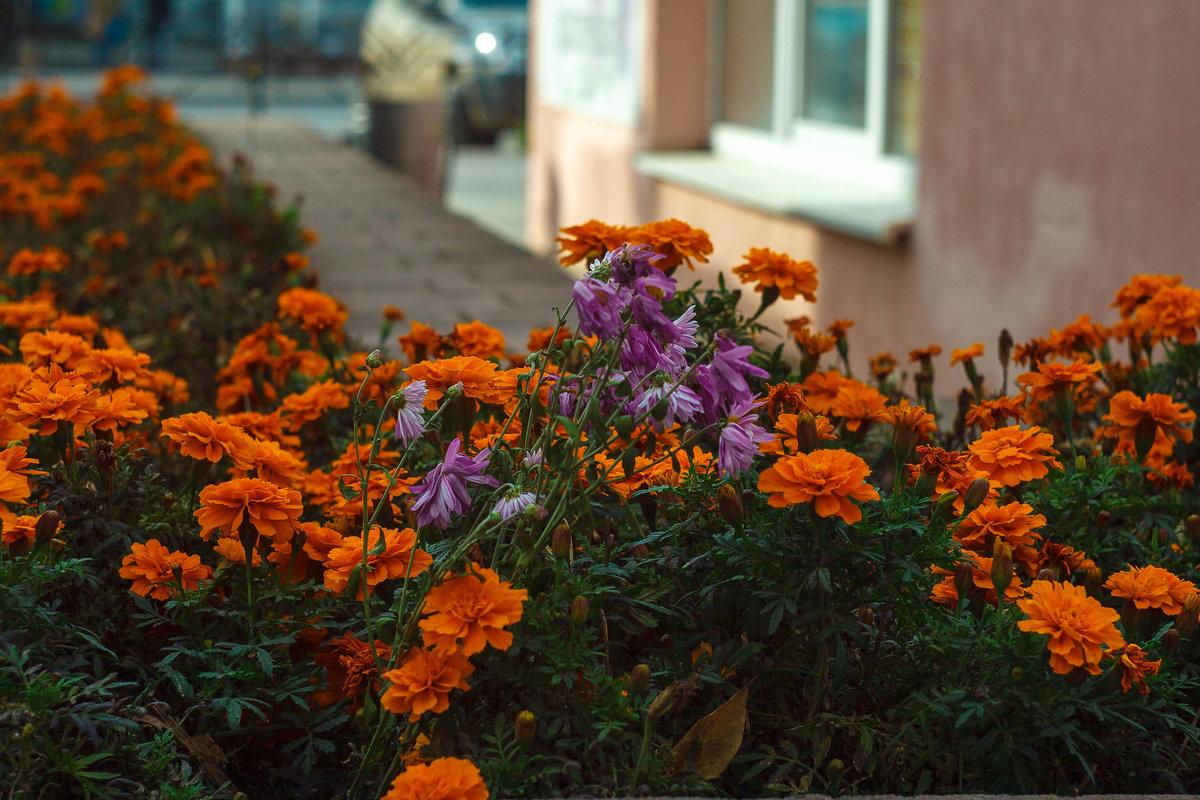 Городские цветы - Дмитрий Костоусов