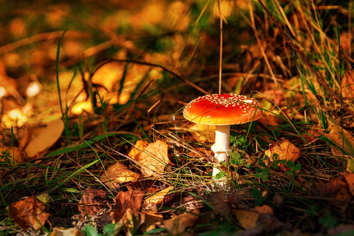 В осеннем лесу. - Igor Yakovlev