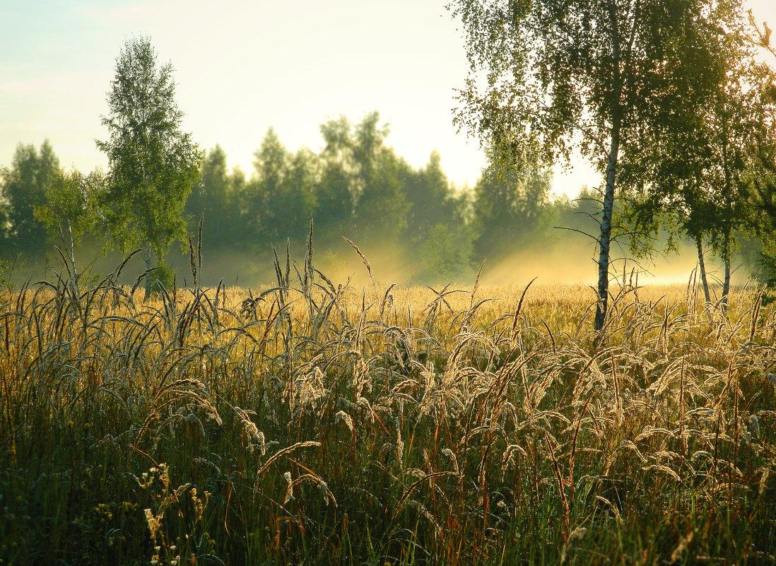 И всходит солнце над поляной... - ольга хадыкина