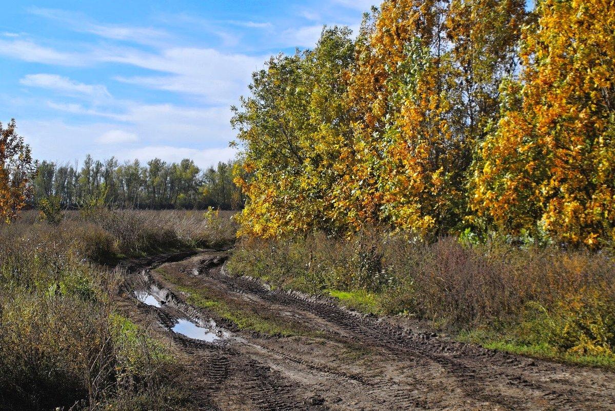 Осенними дорогами.... - владимир