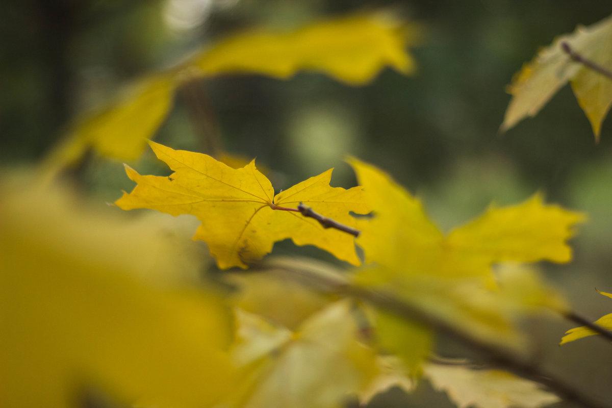 Желтый лист осенний - Наталья
