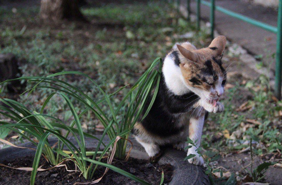 Умывающиеся кошка - Elena Kashmareva