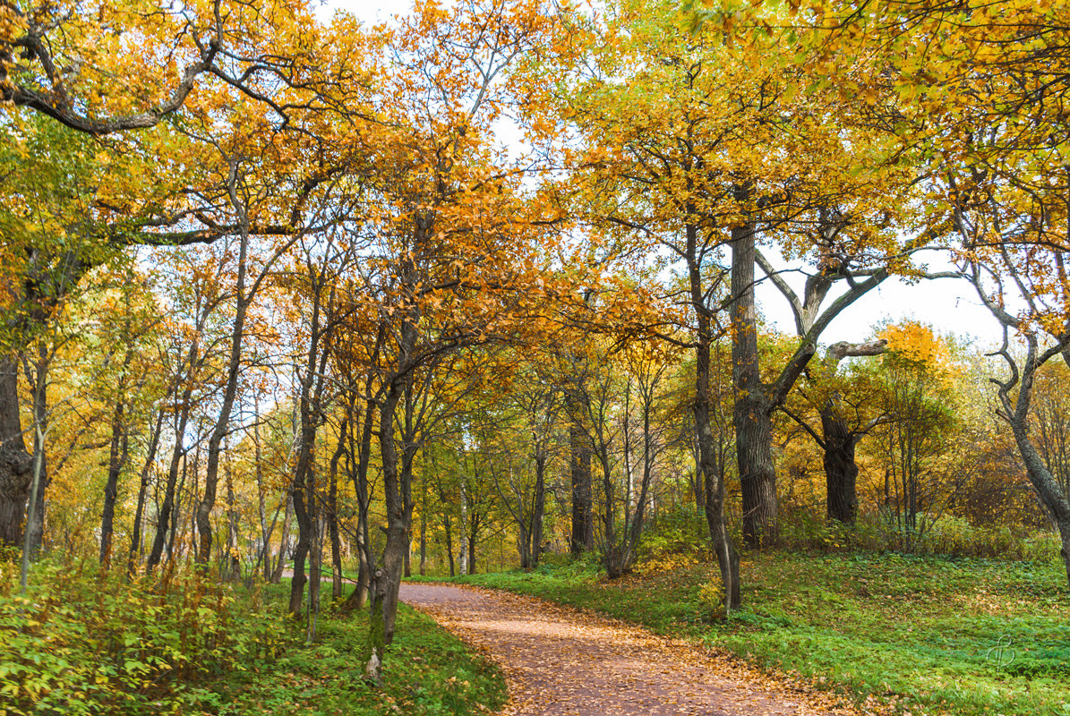 Осень в парке 9 - Виталий