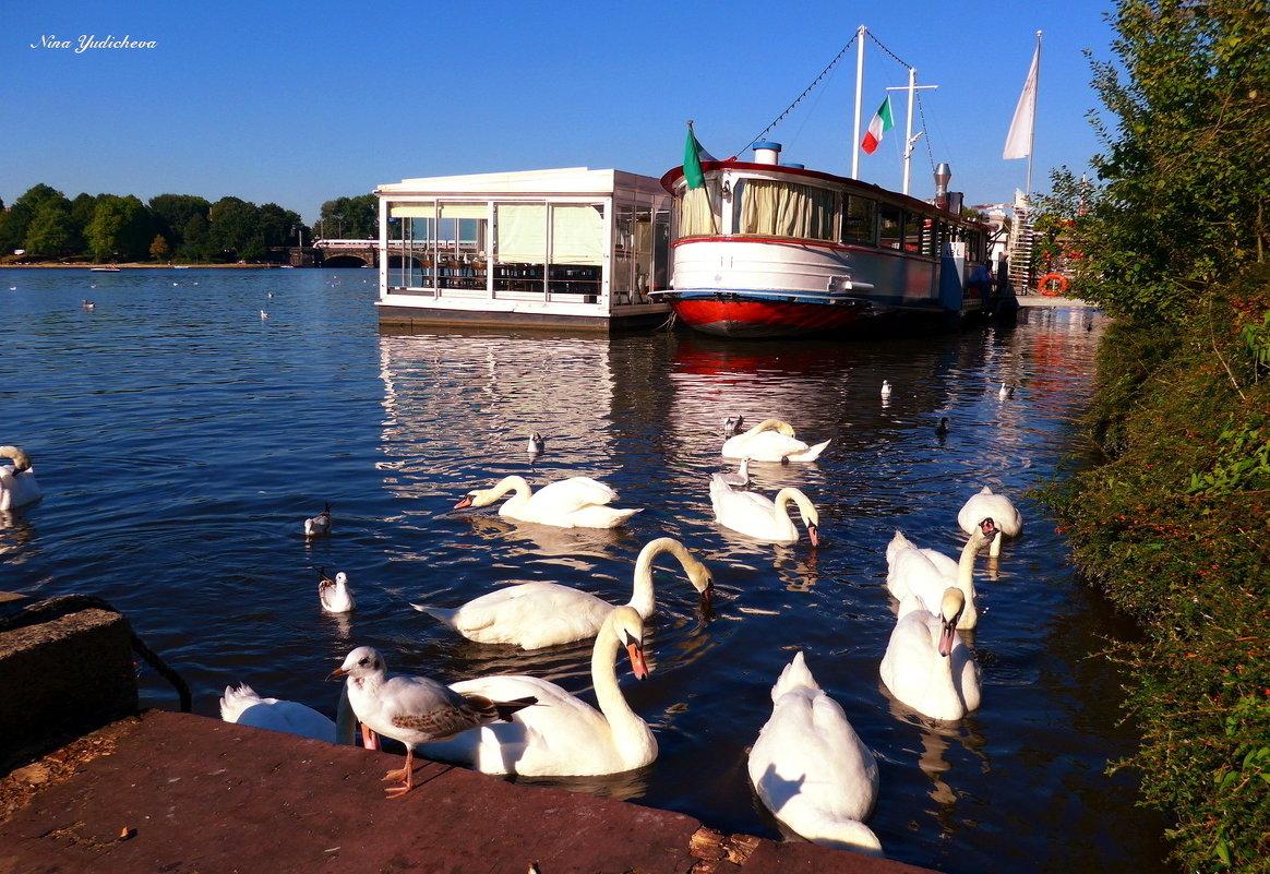 Лебеди на озере Альстер - Nina Yudicheva
