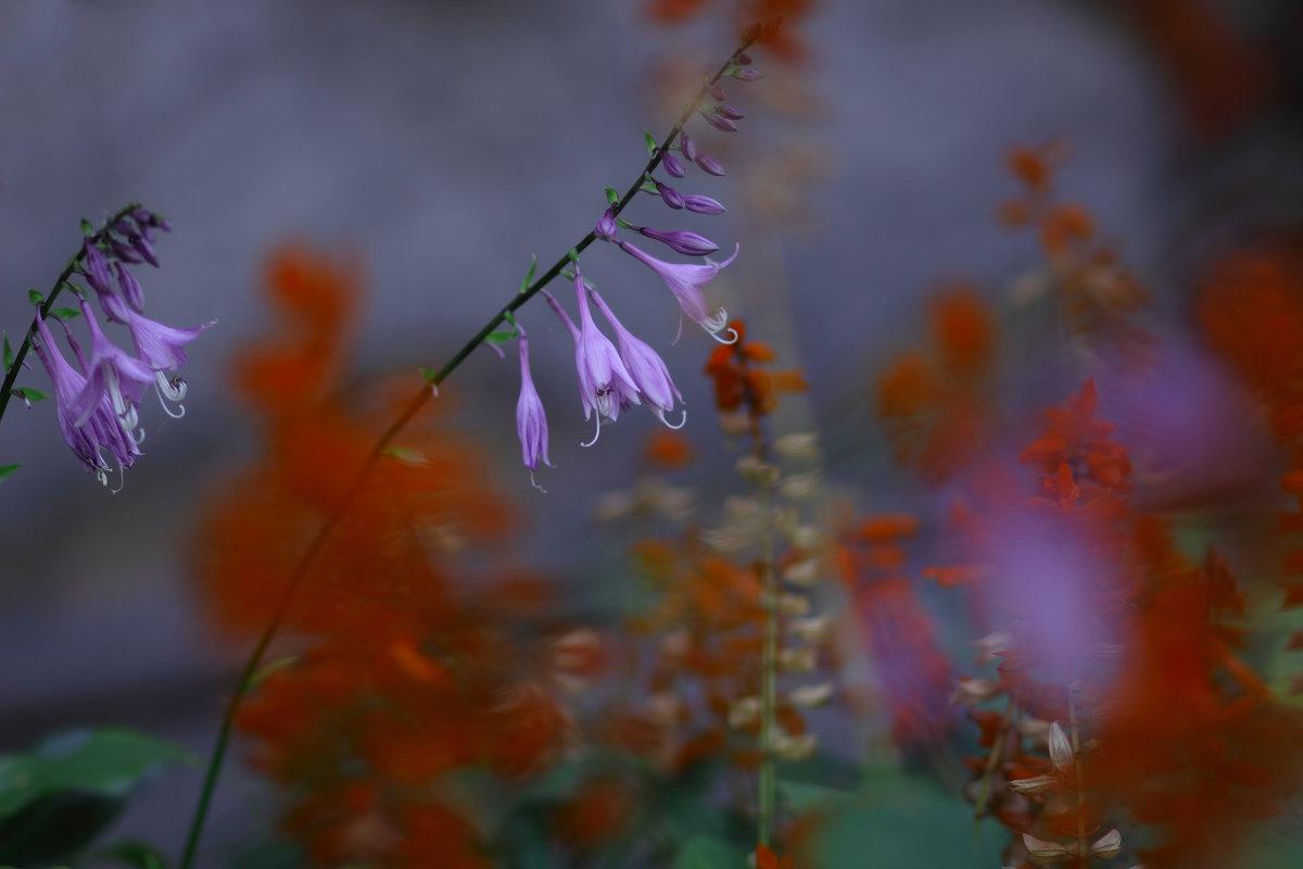 Вдохновившись цветом из кино (3) - Иван Лазаренко