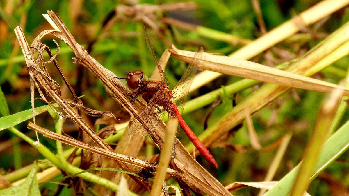 стрекозы сухой травы 3 - Александр Прокудин