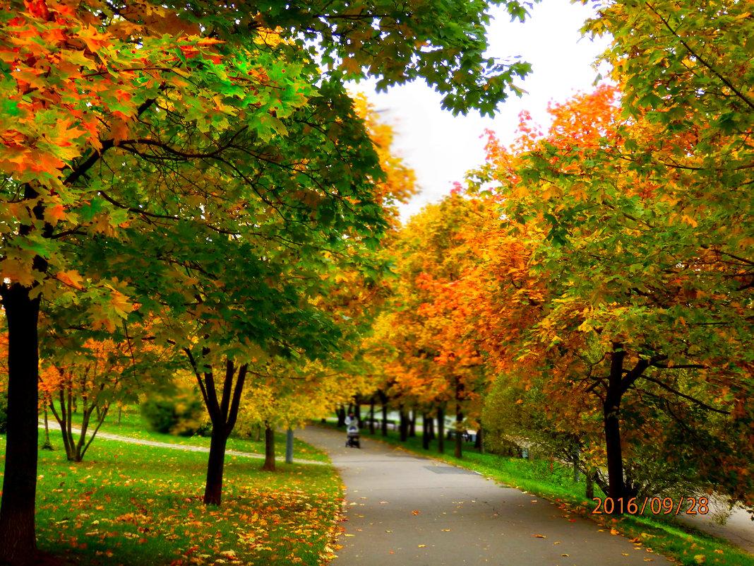 осень золотая - Таня