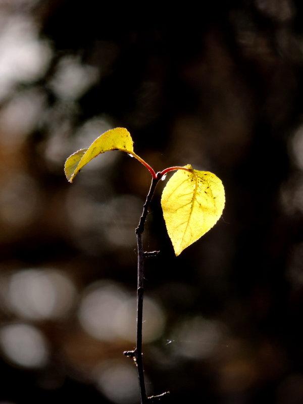 Осень - Наталия