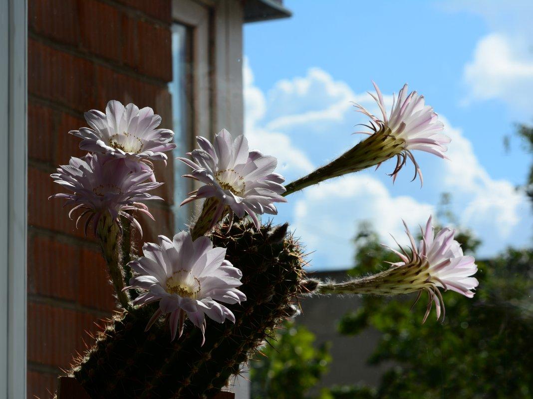 кактусы - linnud