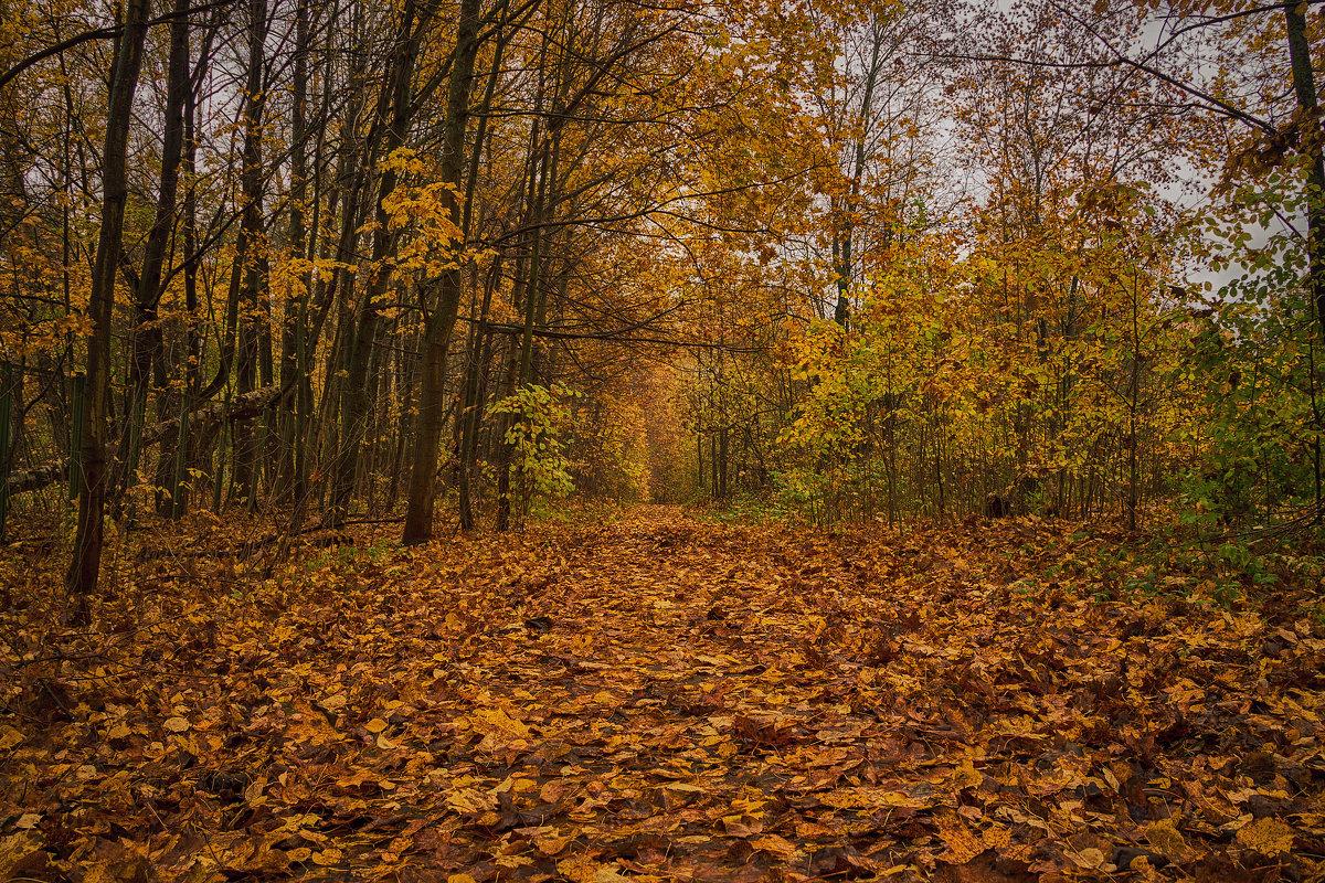 Дорога в осень - Иван Анисимов