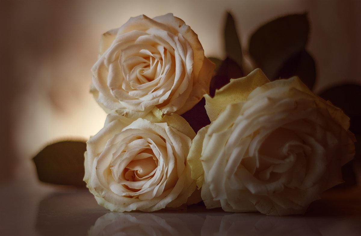 Розы. - Татьяна