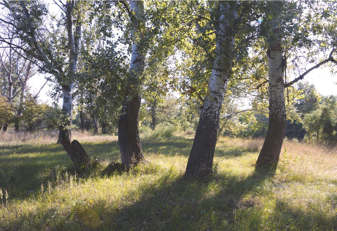 Солнечный сентябрь - Наталия Сарана