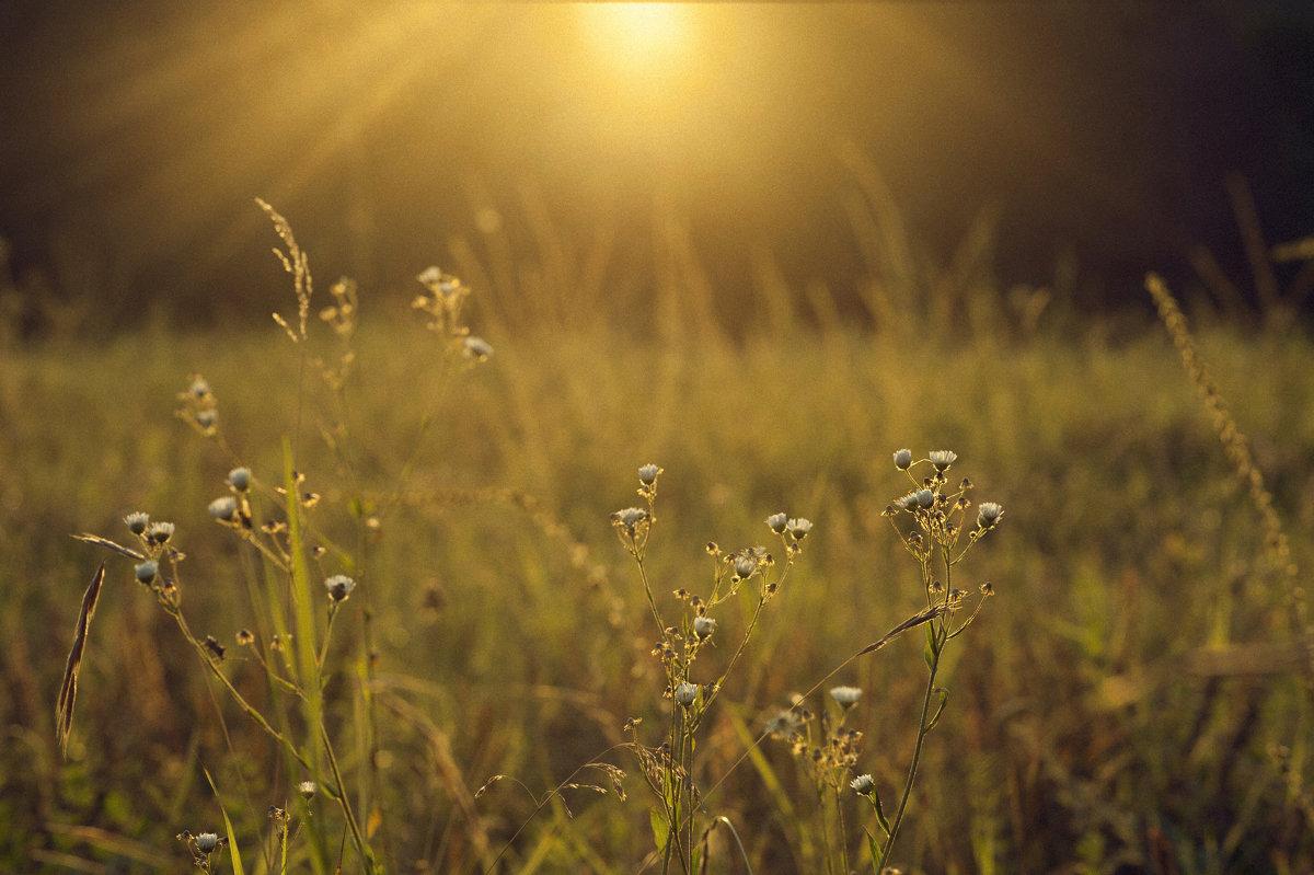 Купаться в лучах солнца это так здорово! Окунись и запомни это ощущение на всю зиму :) - Виктория Велес
