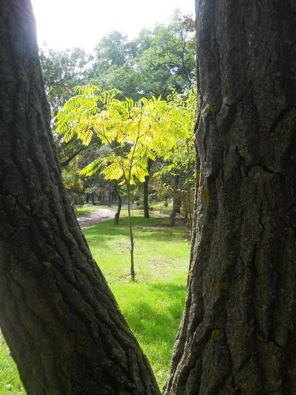 Солнечное дерево в рамке - Галина