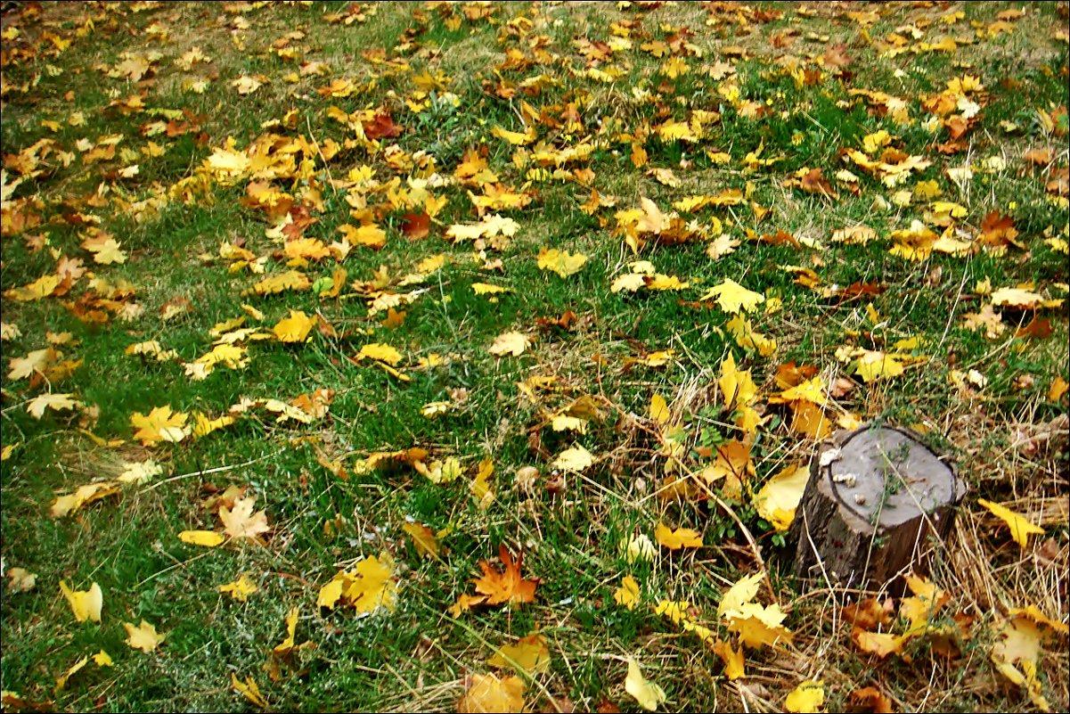 """На ковре из жёлтых листьев..."" - Нина Корешкова"