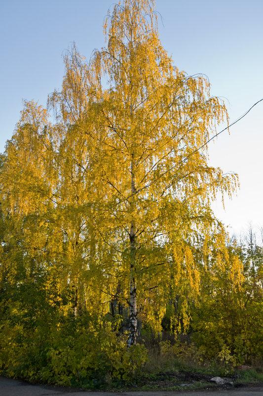 Вятское золото. - Андрей Синицын