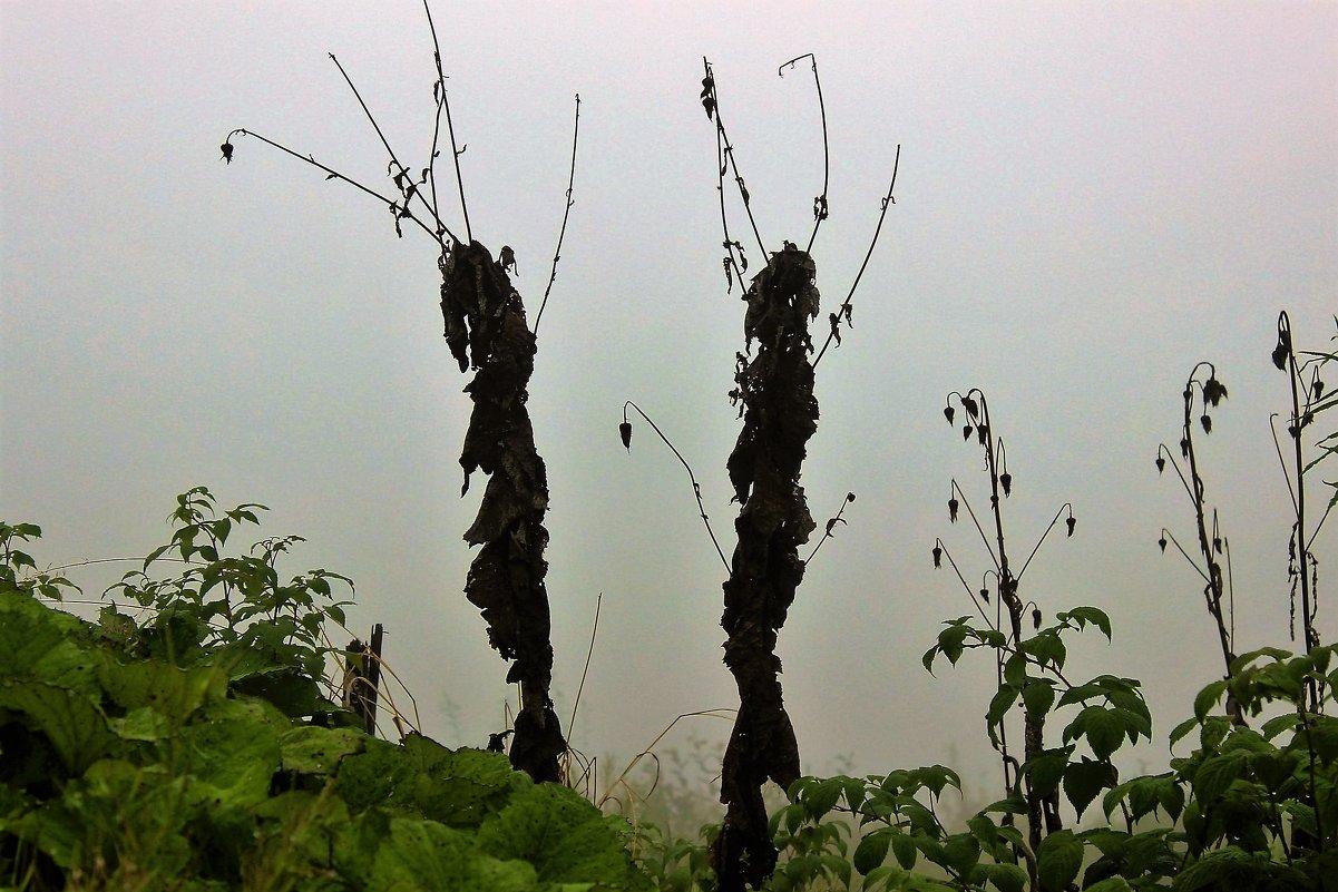 Силуэты в тумане - Сергей Чиняев