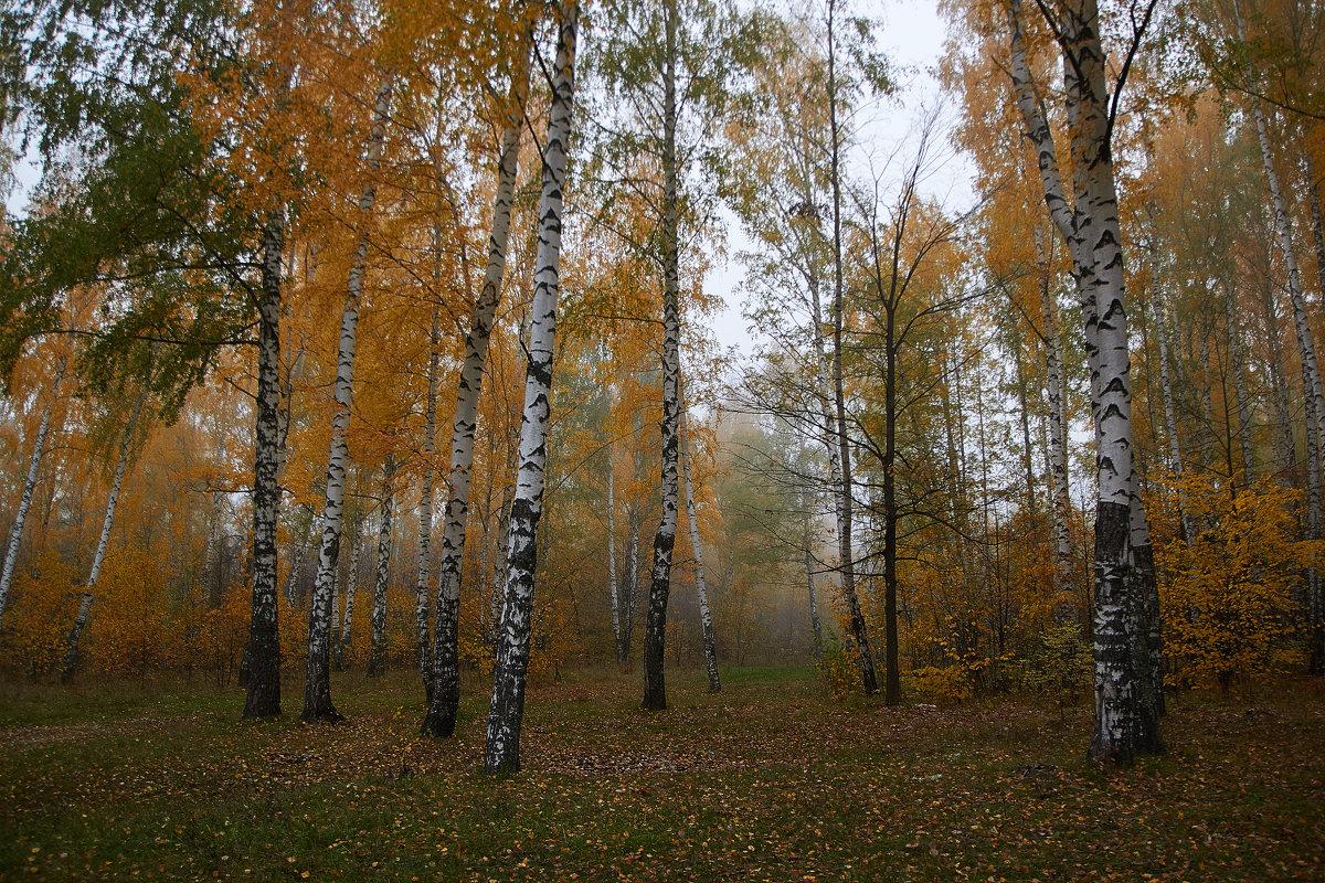 рассеивающийся туман - Седа Ковтун