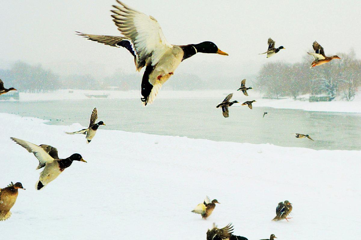 Ксения Кирилловых - зимовка - Фотоконкурс Epson