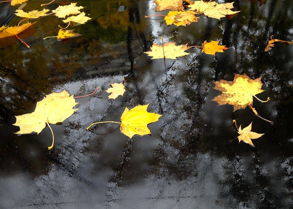 Осенние листья - анна нестерова