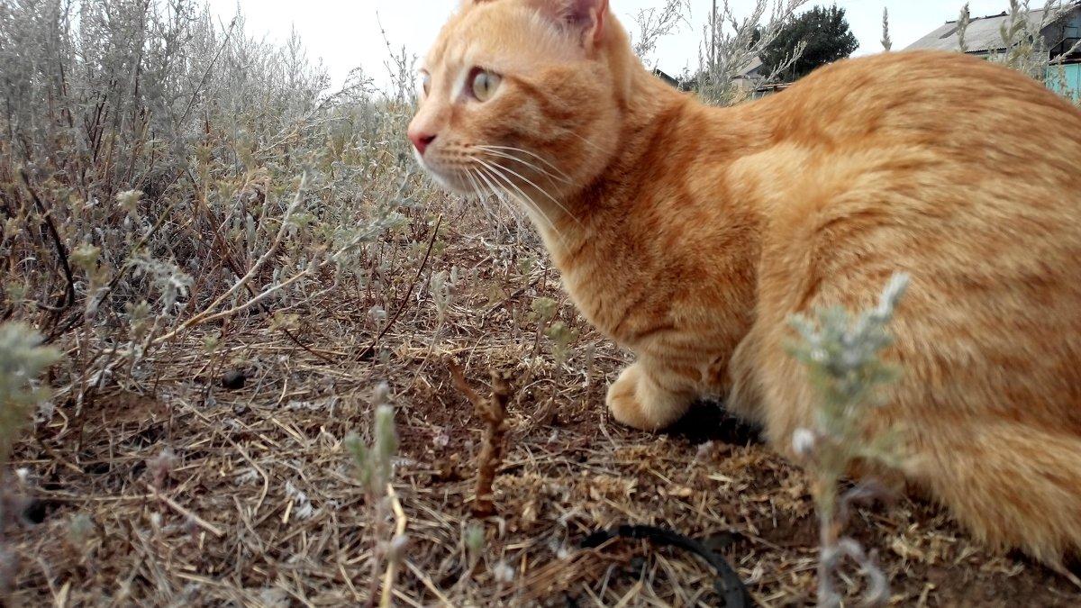 Лето в деревне кота Рыжика - Татьяна Королева
