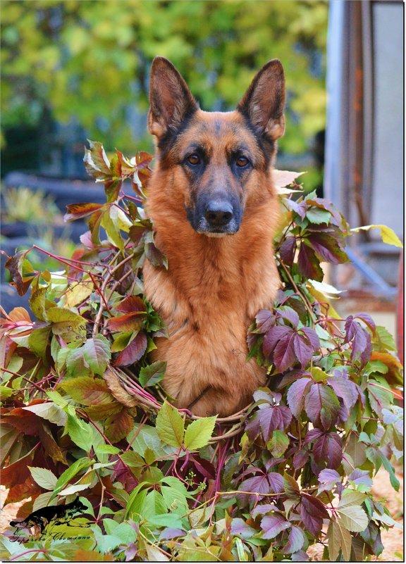 Любимая моя собака!!! - Светлана Горячева