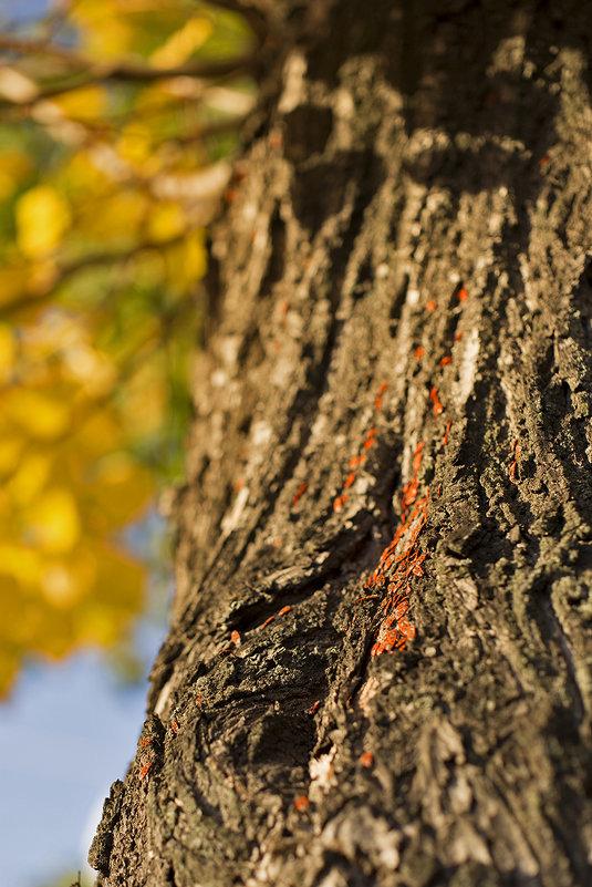 колония красноклопов в лучах осеннего солнца - Андрей Франчук