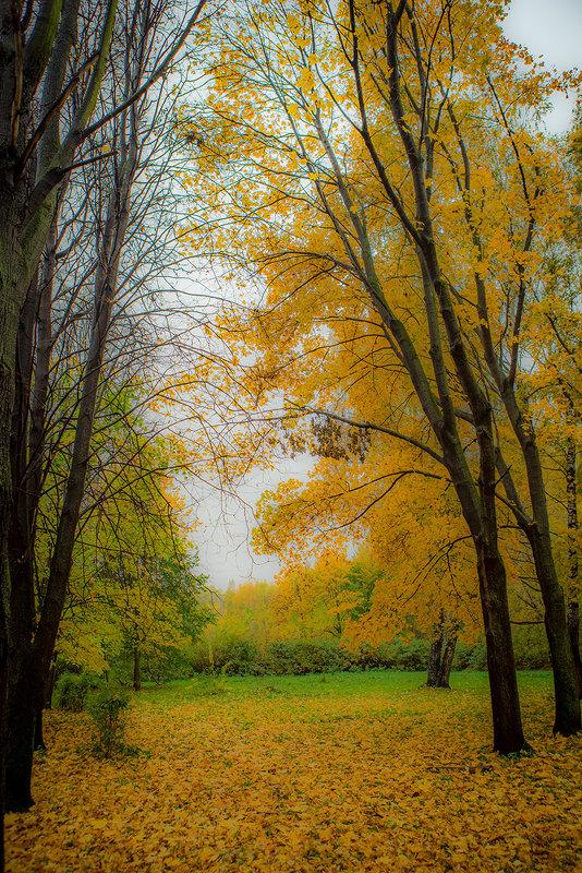 Осенняя элегия - Игорь Герман
