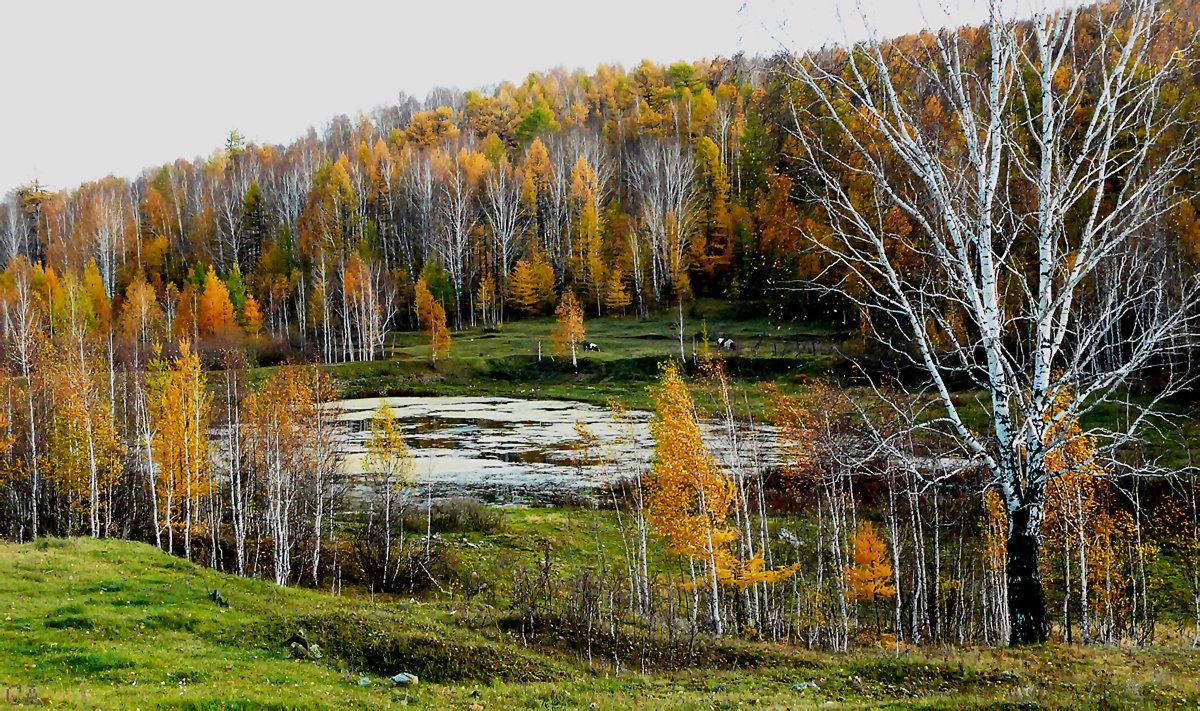 Светятся лиственницы - Александр Садовский