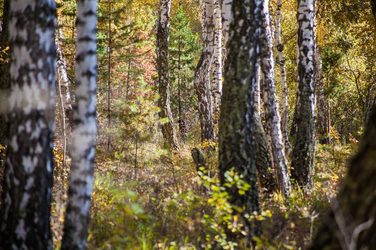 Осень пришла - Евгений Мельников