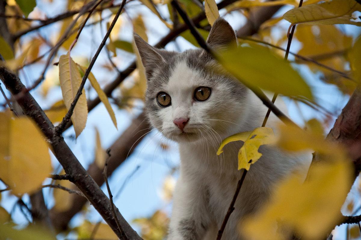 Котоосень - Наталья Димова
