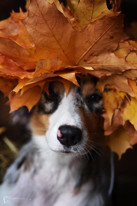 Девушка Осень - Диана