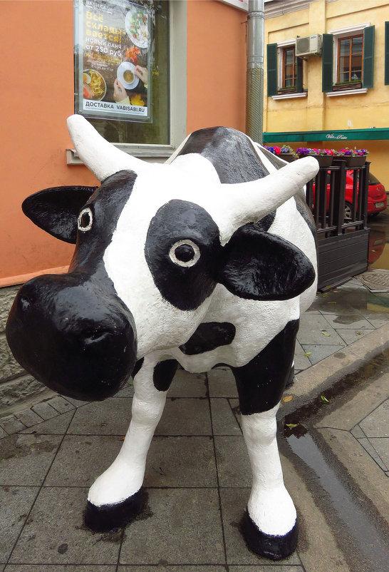 Городская корова - Андрей Лукьянов